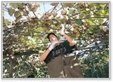 farmstay01_03