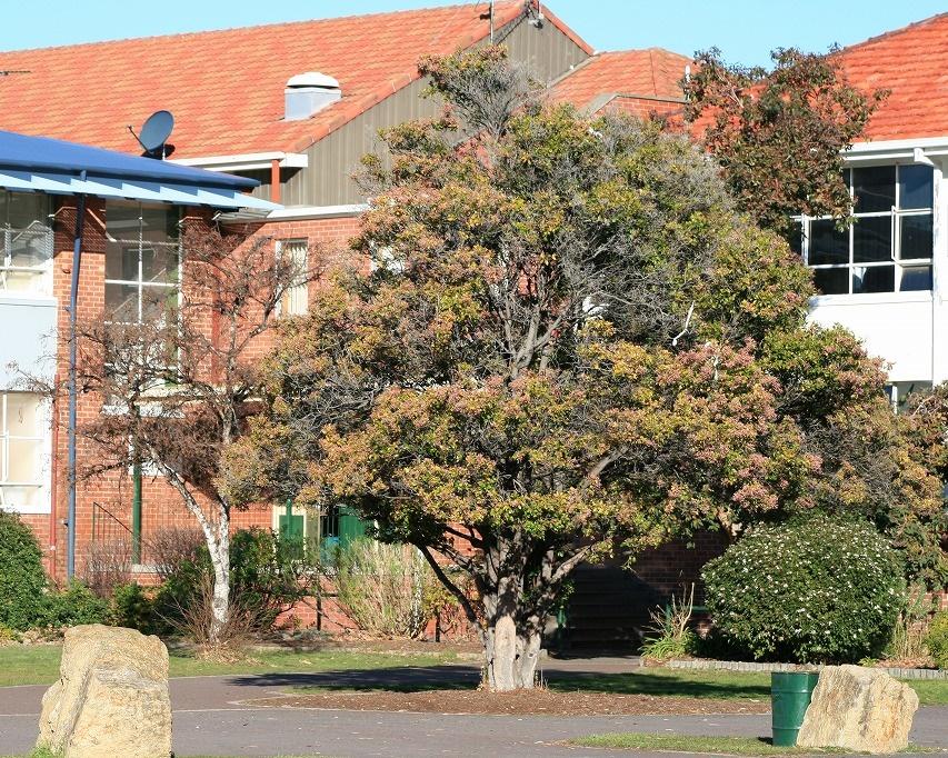 clarence-high-schoolcourtyard
